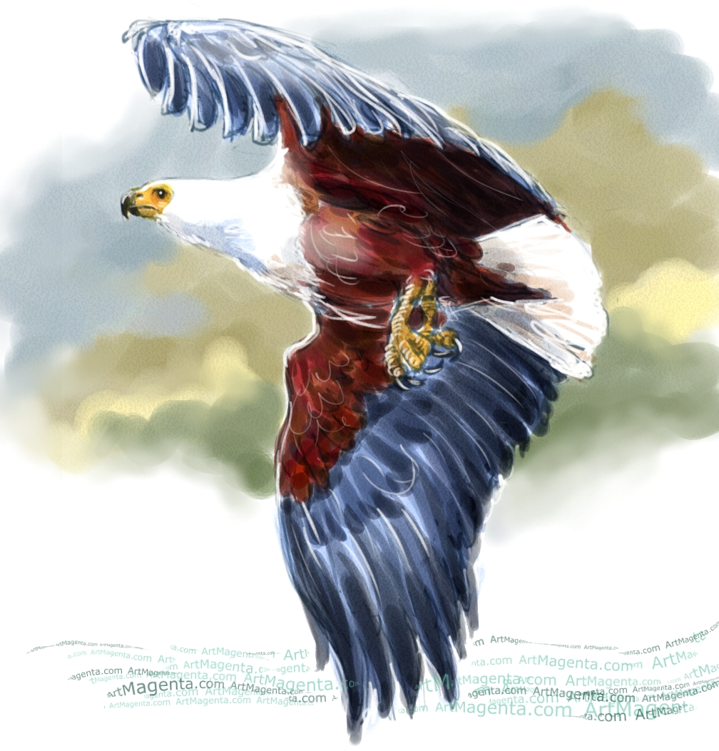African fish eagle sketch painting. Bird art drawing by illustrator Artmagenta