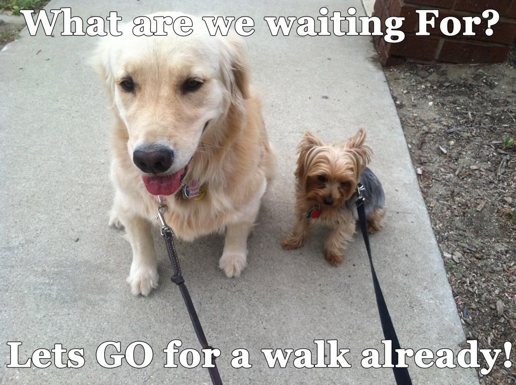 Dog Walking Rules