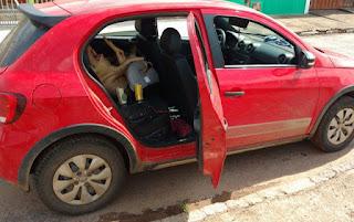 Motorista embriagado transportava porco morto em cadeirinha de bebê