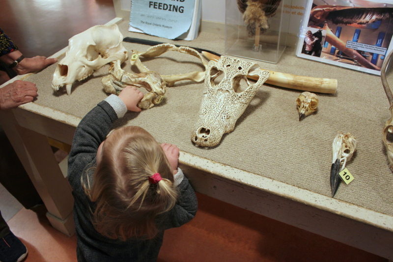 Hands-on Biodiversity Gallery at the Royal Ontario Museum