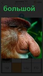 у странного зверя имеется большой вытянутый нос