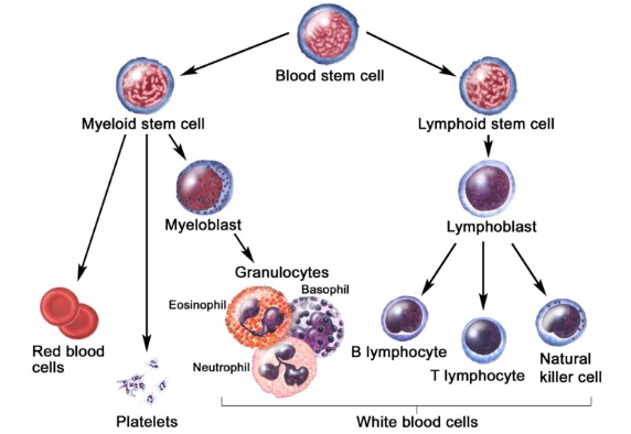 Different Types of Blood Cancer