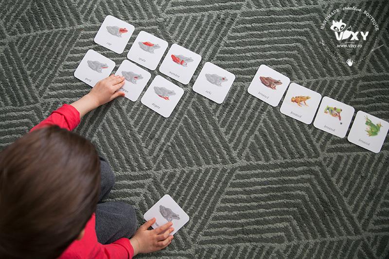 activitati cu broaste, jocuri cu broaste, joc broasca, broaste, despre broaste, vixy.ro, activitati montessori, tema broaste