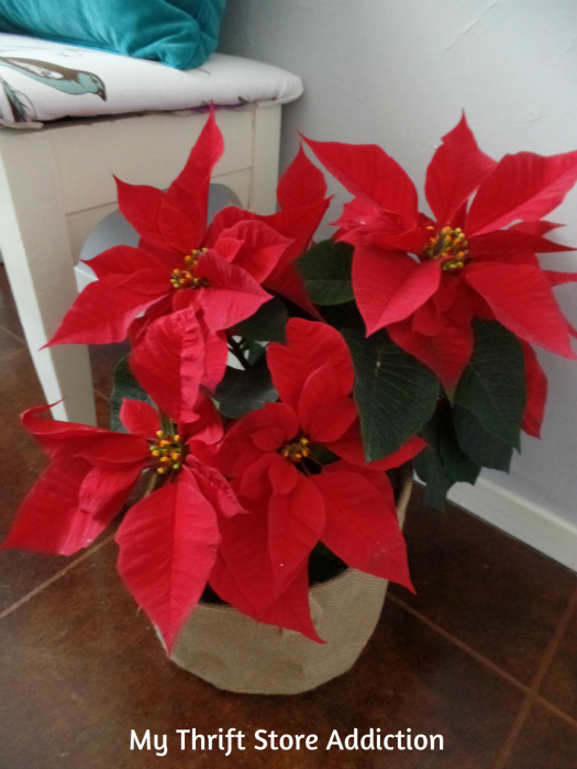 Friday's Find: Clearance Poinsettias to Deck My Halls... mythriftstoreaddiction.blogspot.com