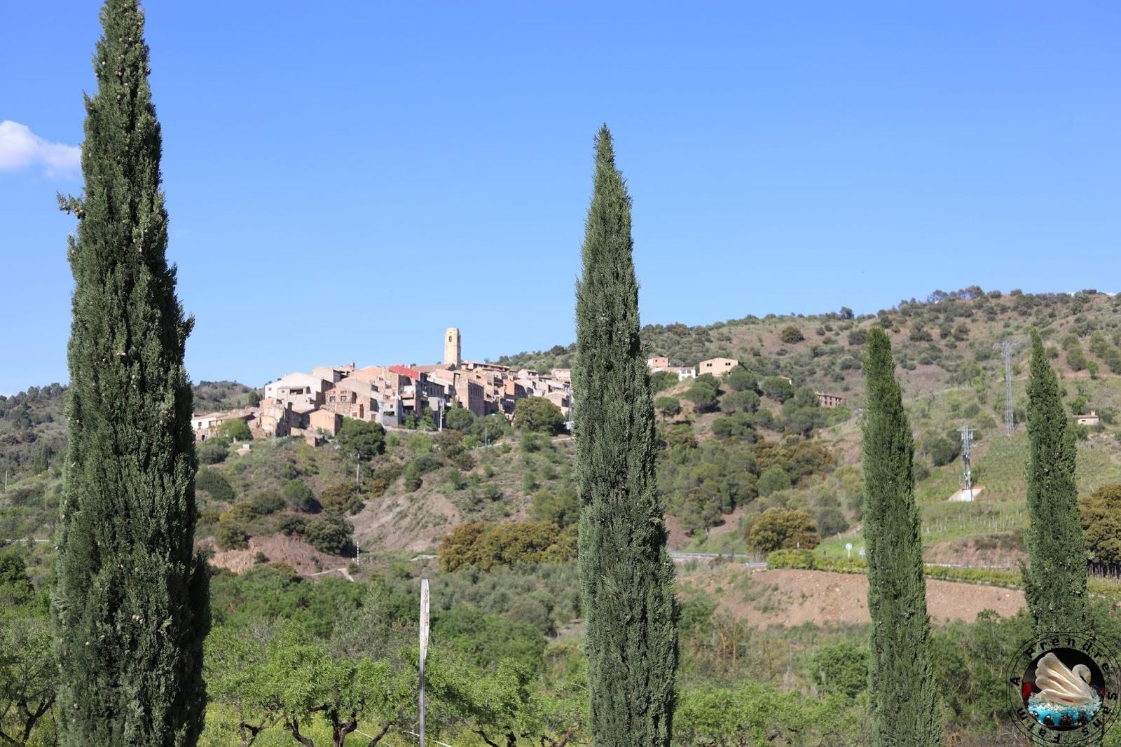 Visite et dégustations de vins à Bodegas Mas Alta - Vilella Alta