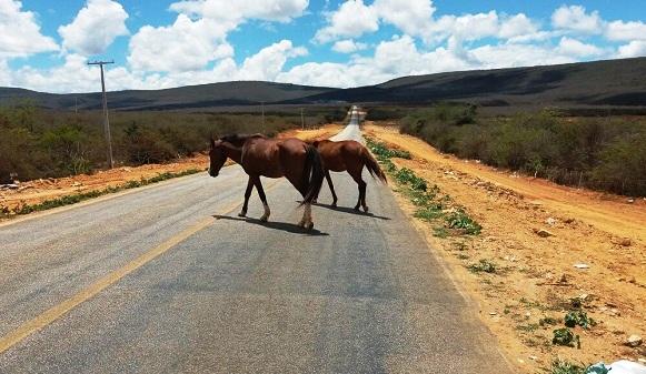 Chapada: Animais soltos em rodovias aumentam riscos de acidentes