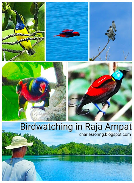 birdwatching in Raja Ampat