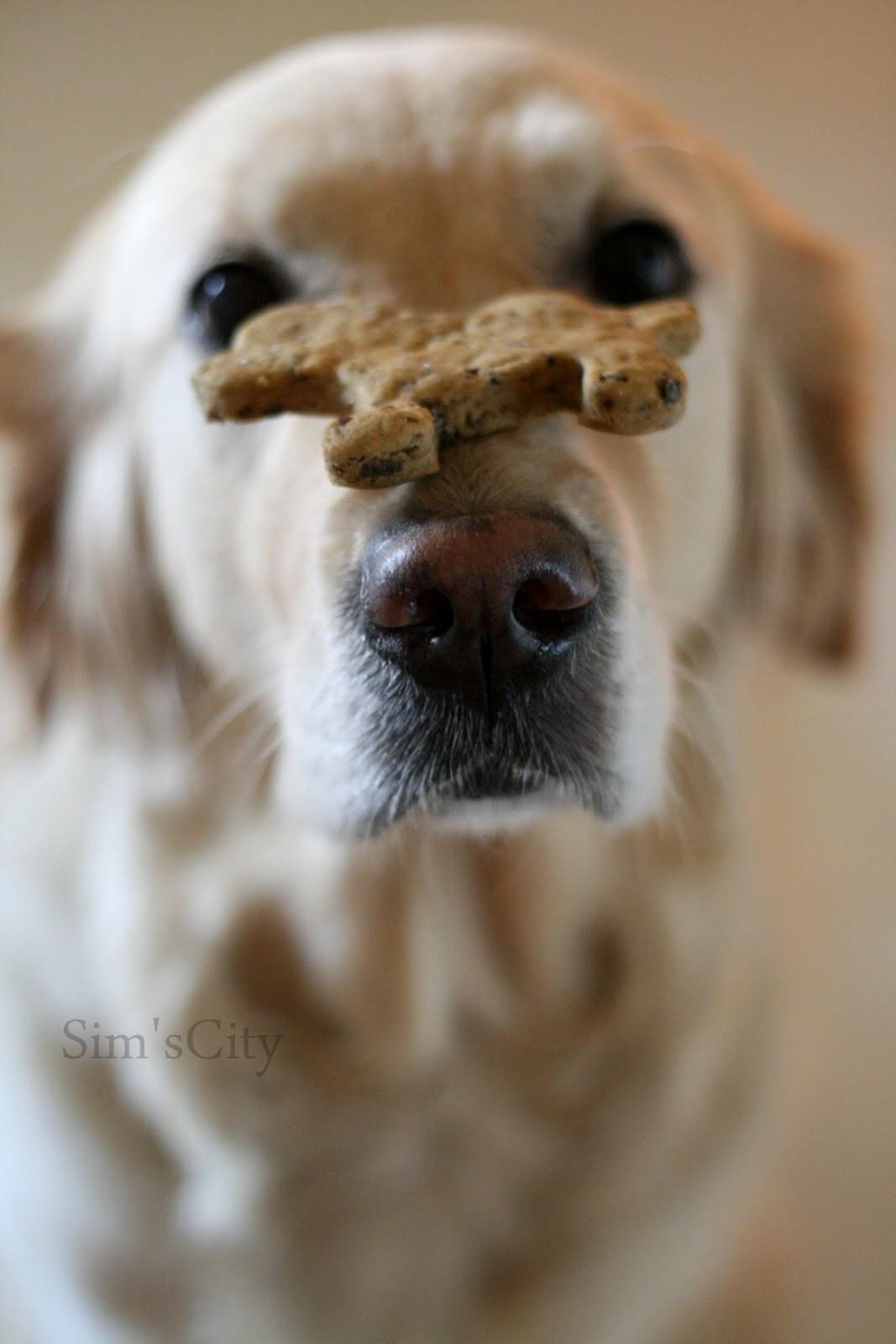 Köpekler İçin Kurabiye Tarifi