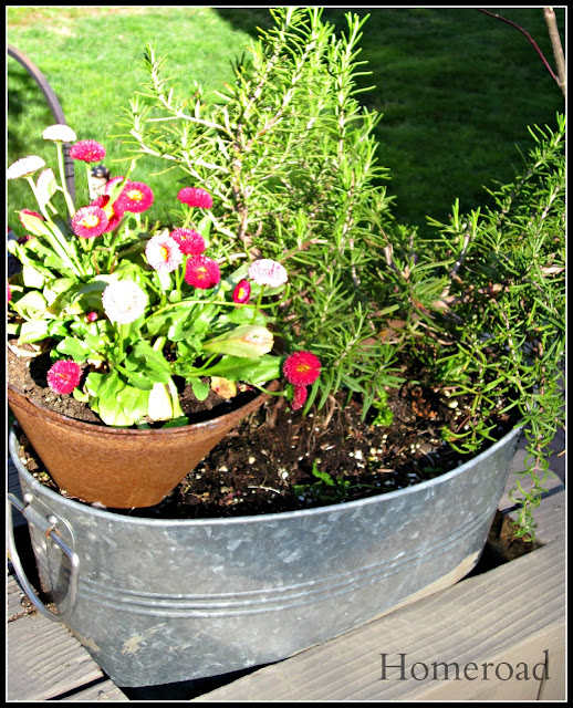 galvanized steel tub filled with plants and flowers