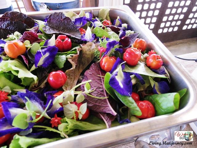 Organic Salad Sonrisa Farm