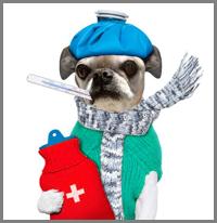 veterinaria online tratamiento de influenza en perros