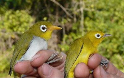 New Bird Species