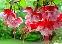 От цветов на которые смотрят к цветам которые едят, цветы, съедобные цветы, травы, съедобные травы, какие цветы можно есть, какие цветы нельзя есть, цветы в кулинарии, съедобный букет, какие цветы можно добавлять в еду, советы кулинарные, экзотическая кулинария, еда, кулинария, едят ли цветы, как есть цветы, рецепты из цветов, как добавлять цветы в еду, съедобные цветы