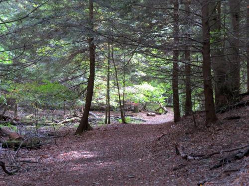 Devil's Kitchen Trail Muskegon State Park