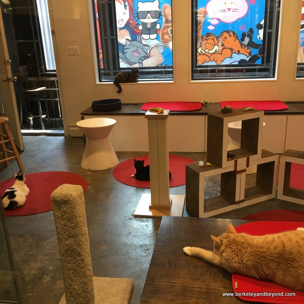 cattery room at Koneko cat cafe in NYC
