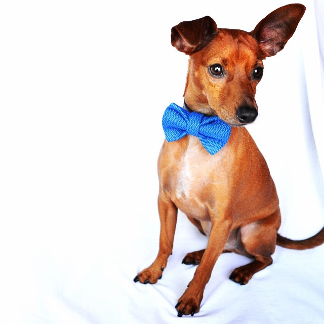 The Thrifty Pup - Bows and Bowties for Your Pet