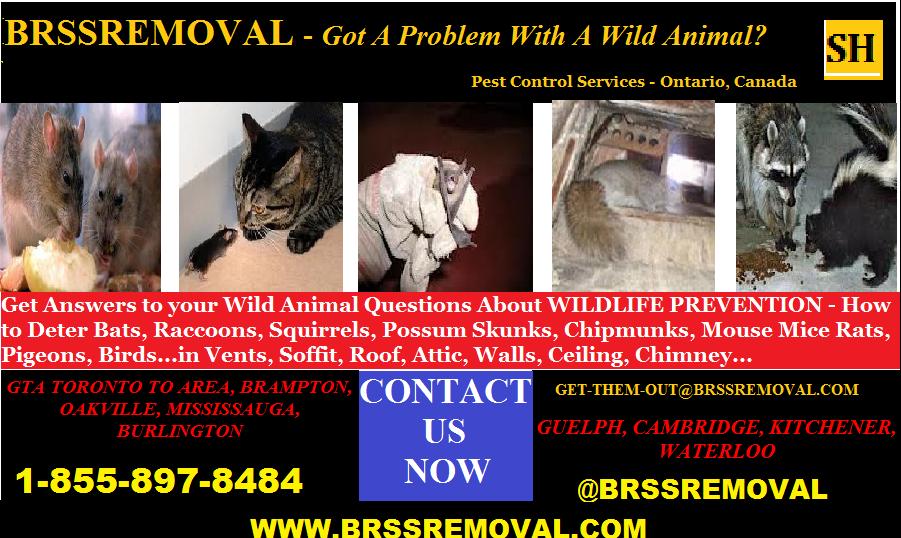 226 600 5597 Wildlife Removal