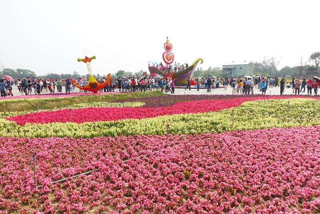 2019桃園彩色海芋季~桃園彩色花海