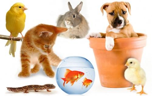 تعريف الحيوانات البرية