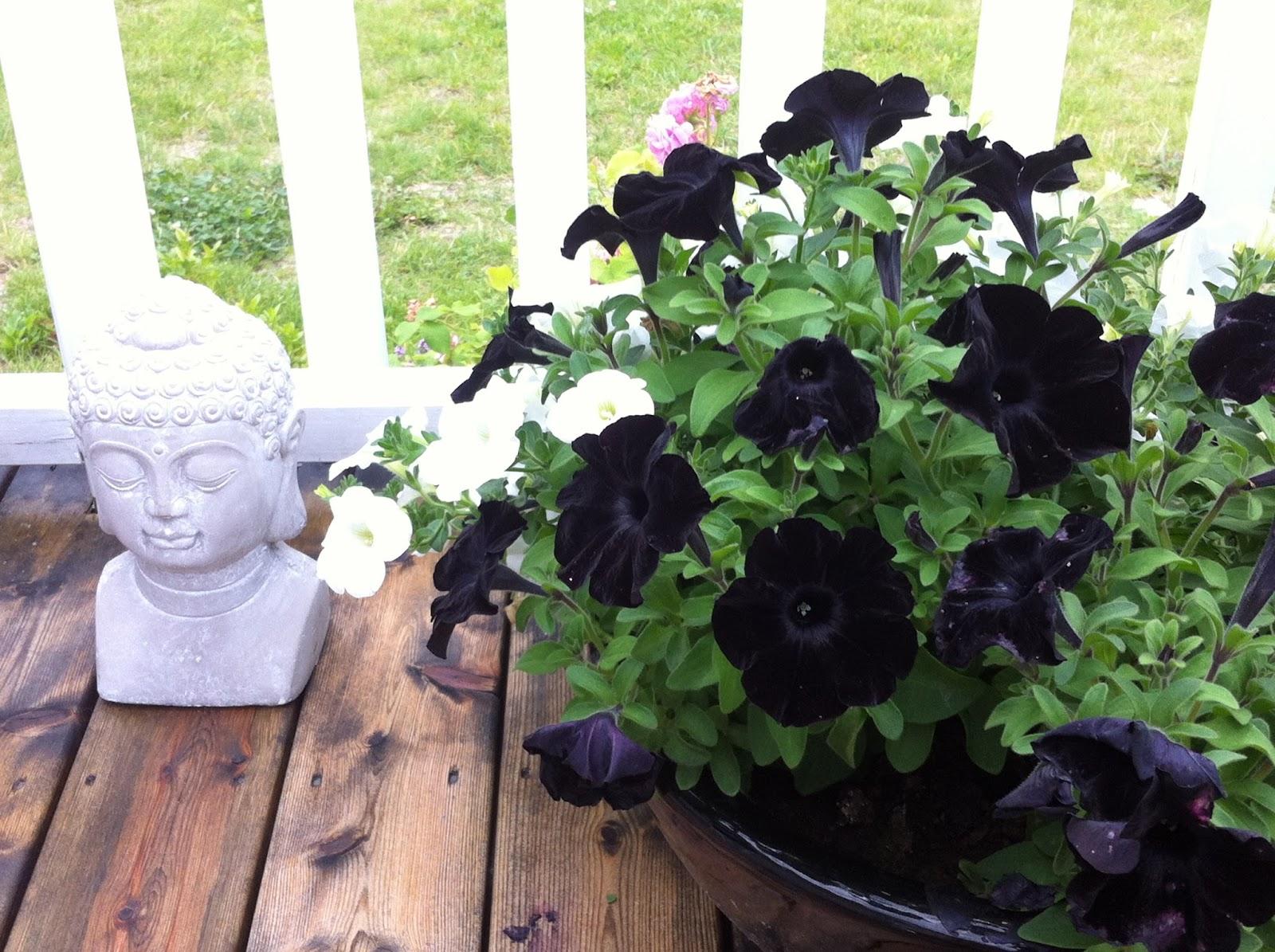 Blooming home garden juli 2015 for Kommode ida 03