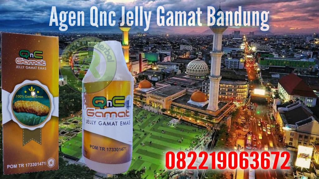 Agen Qnc Jelly Gamat Bandung