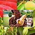 Inilah 5 Buah Khas Tanah Papua