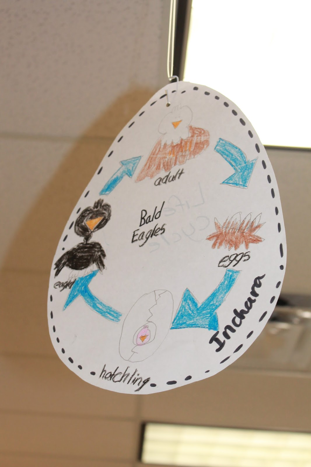 Soaring With Eagles And Soonleprechauns First Grade Wow Diagram Additionally Bald Eagle Life Cycle On If I Had