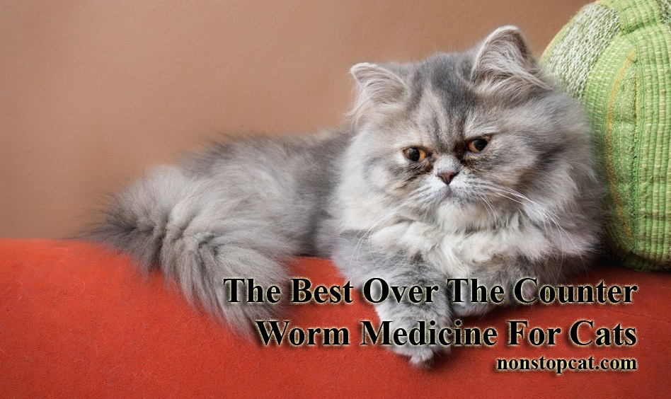 The Best Over-the-Counter Worm Medicine for Cats