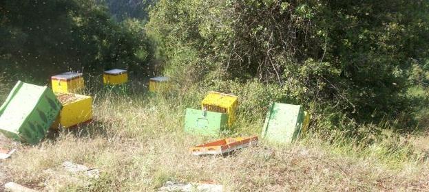 Τα Θανάσιμα λάθη των νέων μελισσοκόμων: Πλήρης οδηγός να μην χάνονται τα μελίσσια!