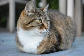 Kebbaikan Memelihara Haiwan Kucing