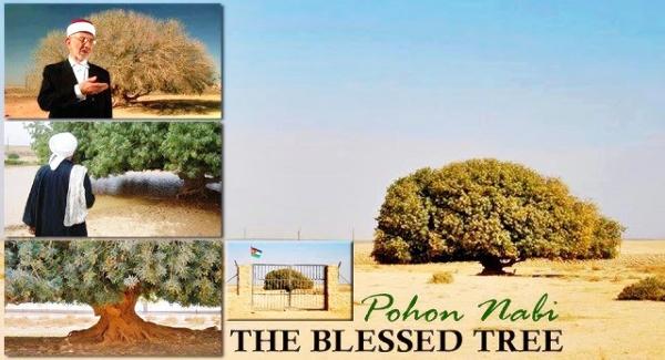 Pohon Pelindung Rasulullah