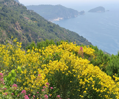 Beautiful Cinque Terre Coastline from the Trail