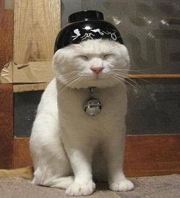 kucing tua tersenyum