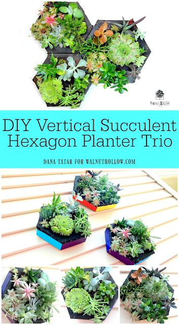 DIY Vertical Succulent Hexagon Planter Trio by Dana Tatar for Walnut Hollow