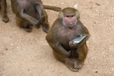 Maid loses brand new Samsung Smartphone as baboon storms house and bashes her