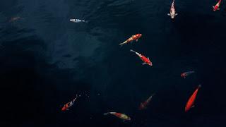 Filosofi prinsip hidup ikan di laut