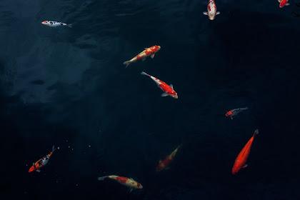 Belajar Prinsip Hidup Dari Ikan Di Laut