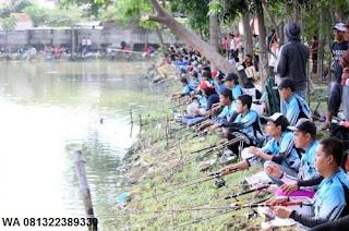 Umpan Serbuk Ikan Mas Musim Panas