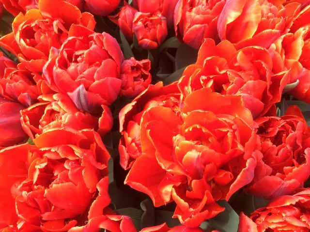 Murillo Tulips by Hetty