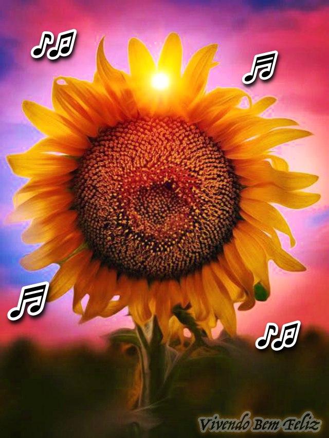 Ouça o som do Girassol:  é tão lindo que soa como música celestial...