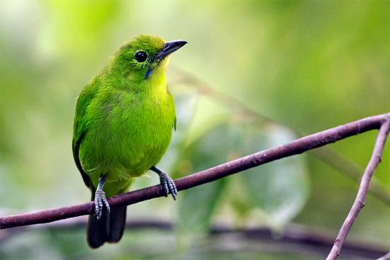 Essential Fatty Acids for birds