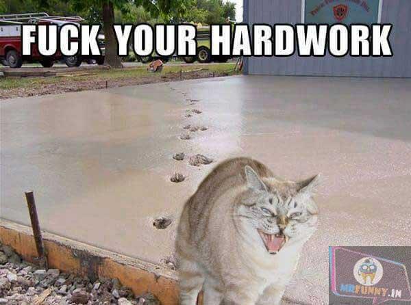 Your HARDWORK