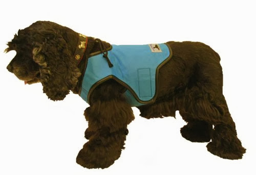 Coolest Dog Products and Gadgets (15) 3