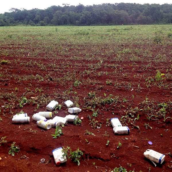 Campos deforestados y botellas vacias con   herbicidas en un campo sembrado de maíz  en Yucatán, México