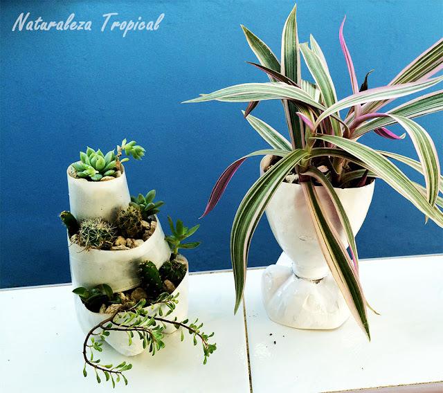 Mini-jardín de suculentas y copa vegetal para tu jardín