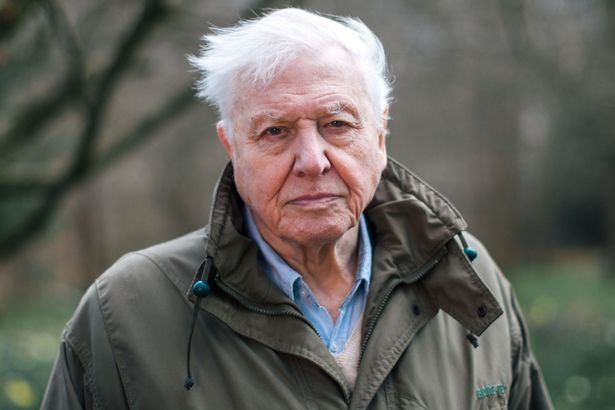 Sir David Attenborough cautioned of the harm deforestation is having on our plane