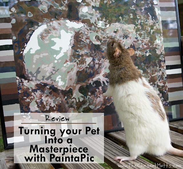 Review: Turning your Pet Into a Masterpiece with PaintaPic