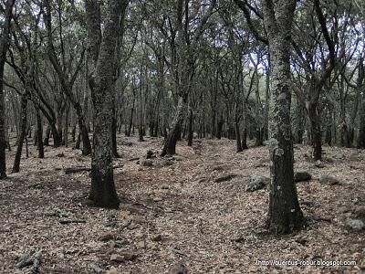 Vegetación en el Cerro Viejo