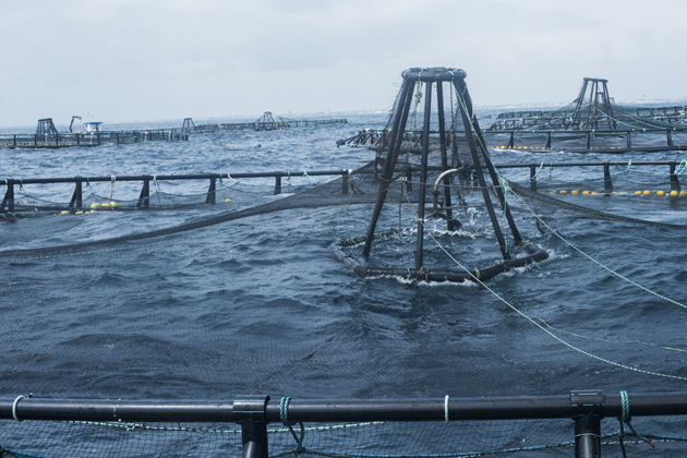 Jaulas de acuicultura Crianza de Nuestros Mares