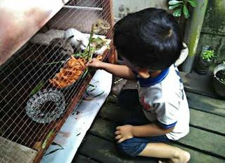 Makanan kelinci kecil wortel